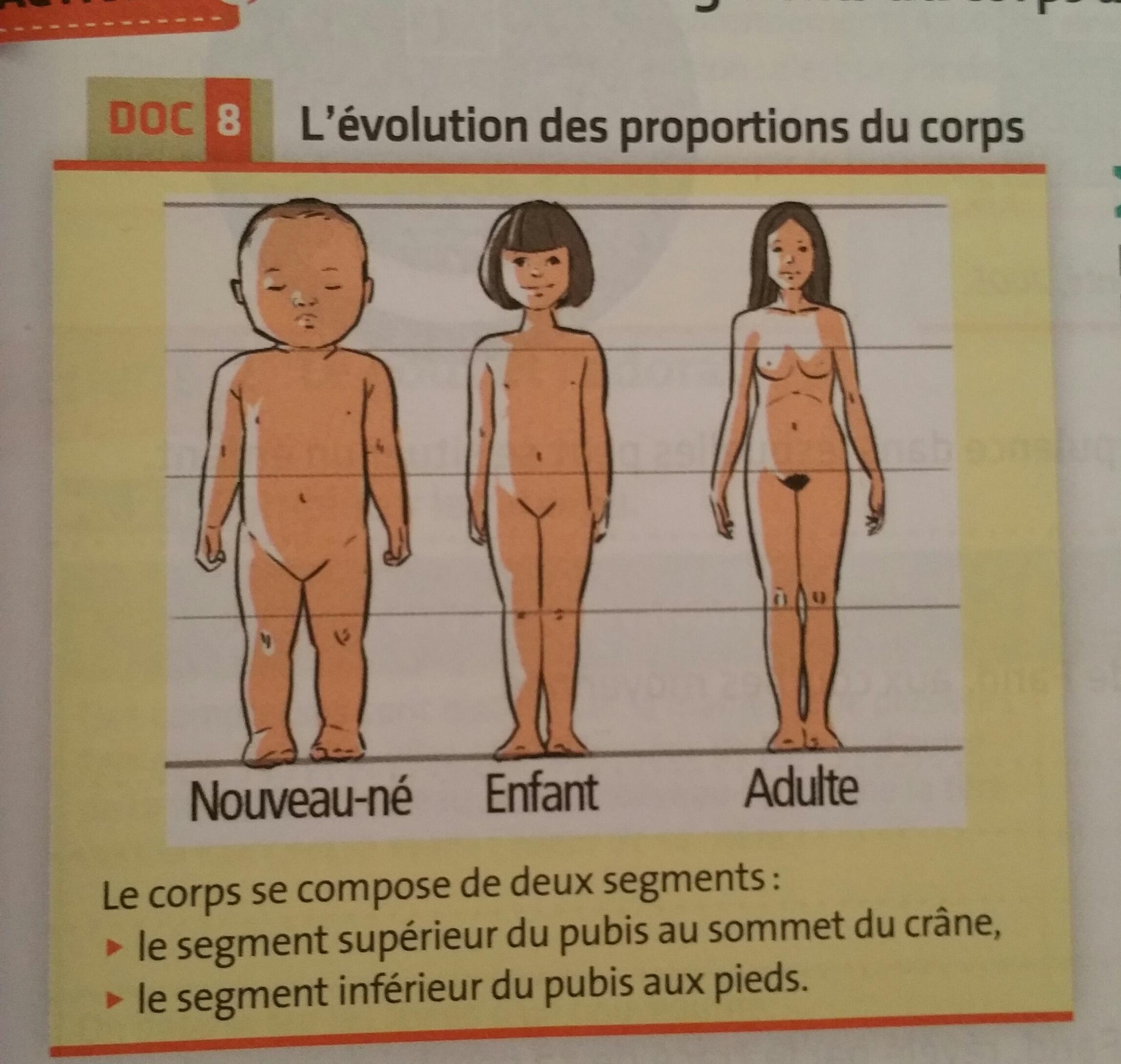 Comparer les proportions des segments inferieur et superieur du nouveau-né  à celles de l adulte. 5918be92fd98
