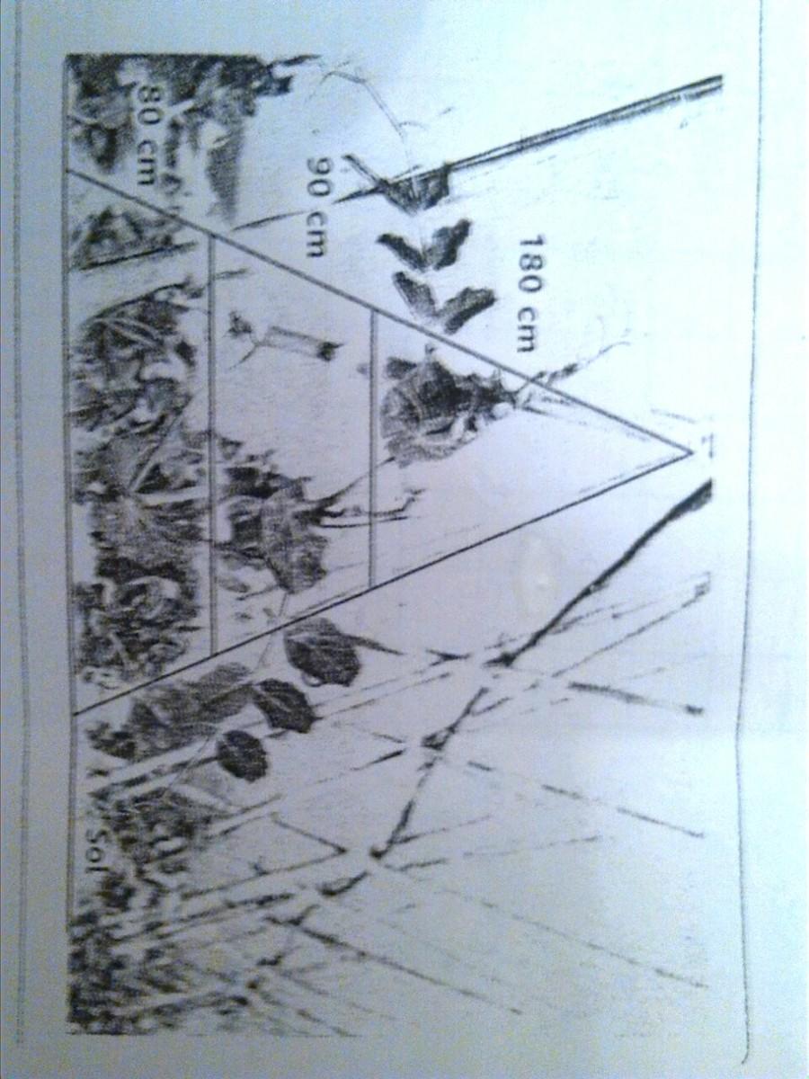 Fabriquer Treillis Bois Pour Plantes Grimpantes marie a acheter 3 baguettes en bois de longueur 350cm pour