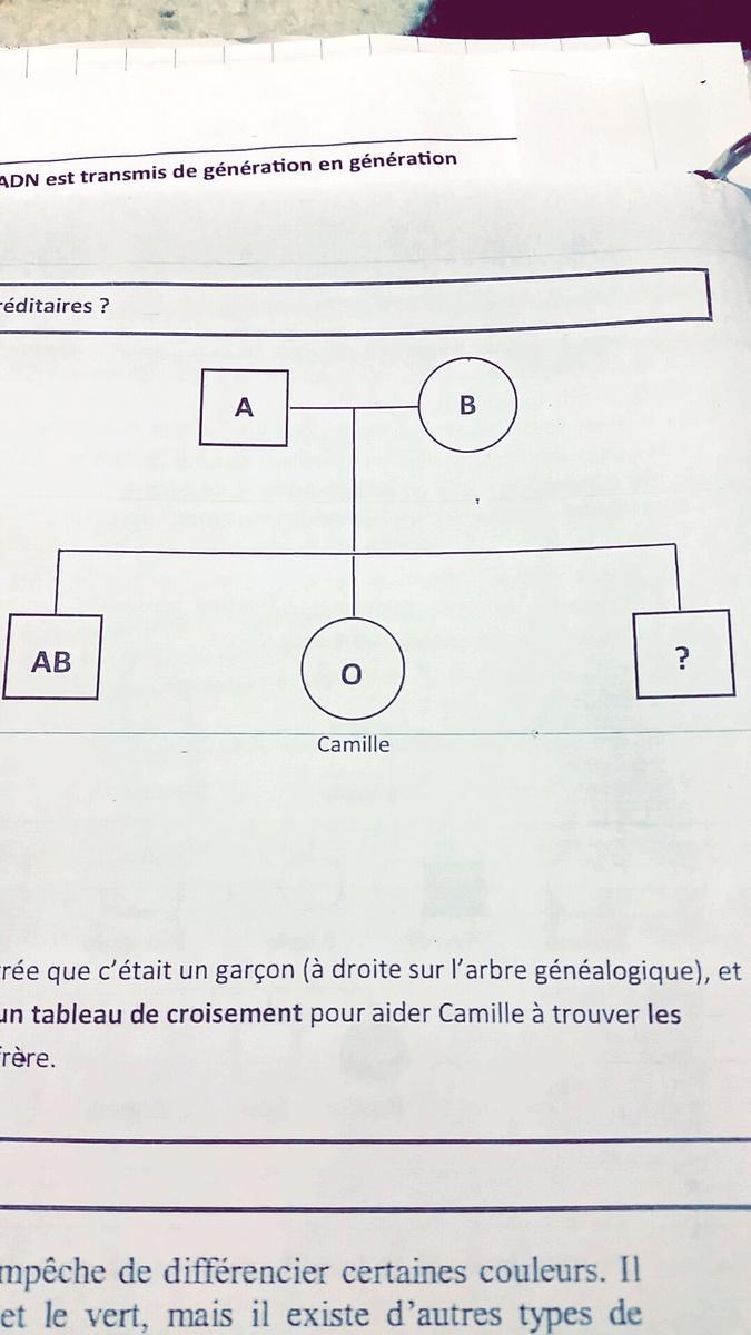 La Maman De Camille Est Enceinte L Echographie A Montree Que C Etait Un Garcon A Droite Sur Nosdevoirs Fr